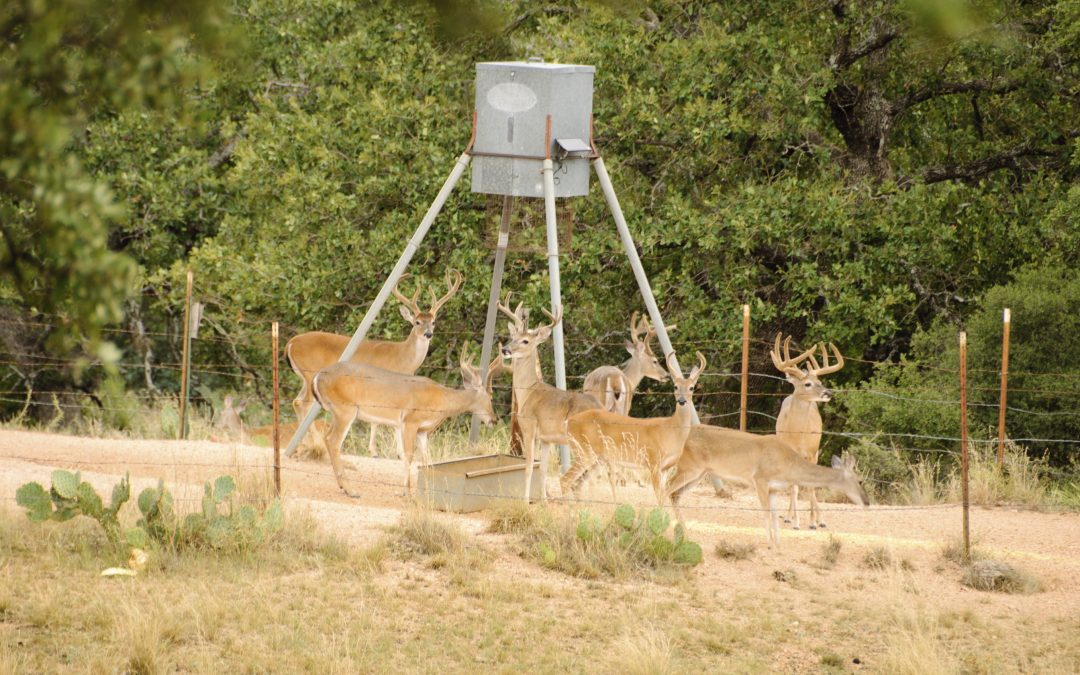 Where You Can and Can't Feed Deer