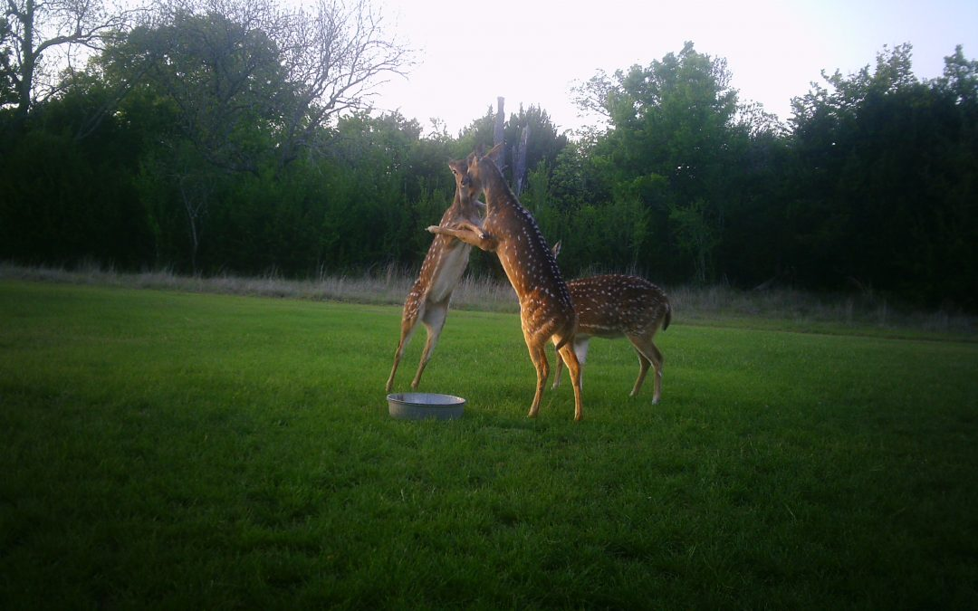 Double Tine Innovations' Ultimate Deer Feed – Product Review