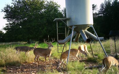 The Basics of Using Deer Feeders