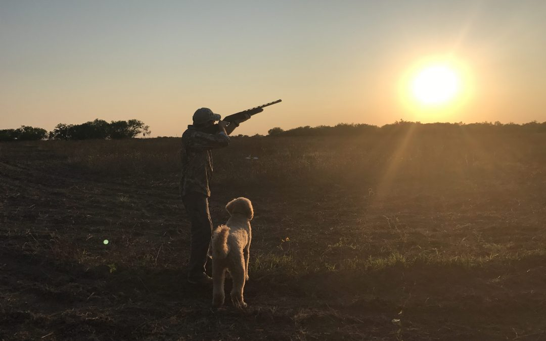 Dove Hunting Tips for the Beginner