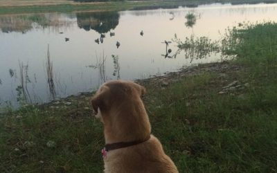 Duck Hunting Tips for the Beginner