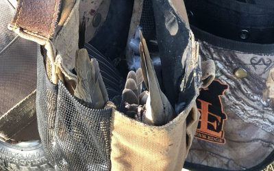 Feed Bandit Podcast Episode 6: It's dove season, part 2