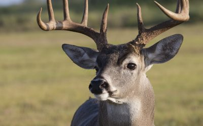 Corn Bandit Consult: Helping a listener improve raw South Texas ranch for hunting