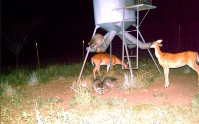 Save Your Money – Trap a Varmint!