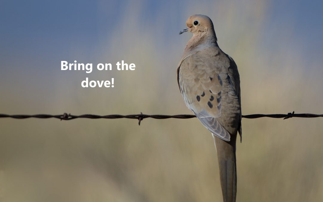 Bring on the dove!