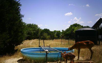 Supplemental Water for Wildlife
