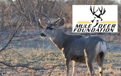 Mule Deer Foundation with Charlie Stockstill