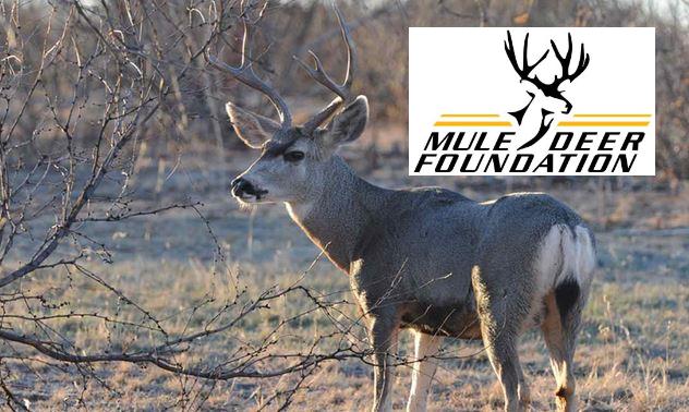 Mule Deer Foundation with Charlie Stockstill