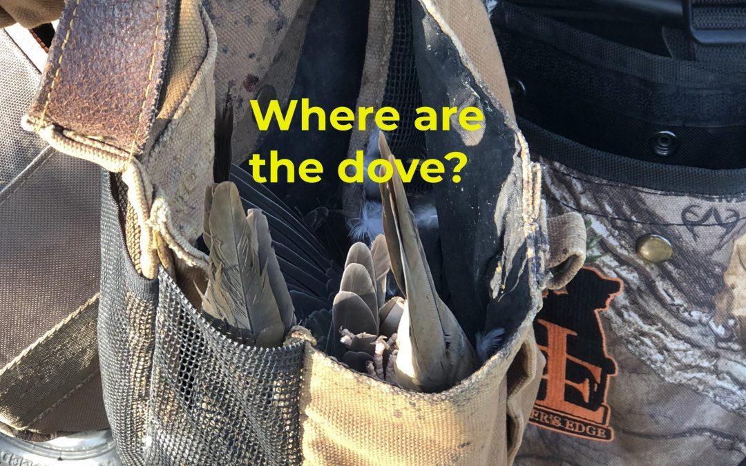 Where are the dove?