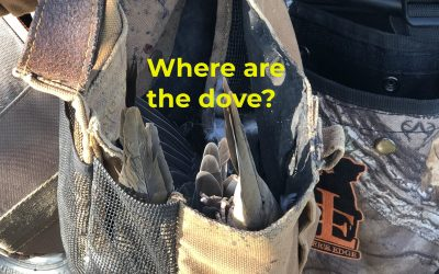 Where are the dove?