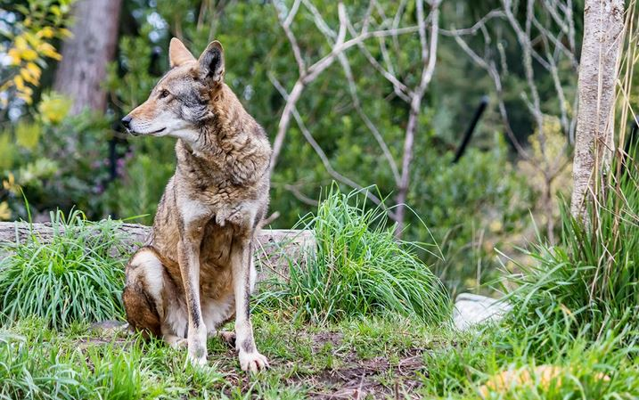 Fun with a scam, Galveston Red Wolves and more