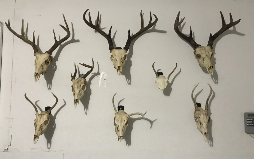 "Creating your own ""Hall of Horns"""