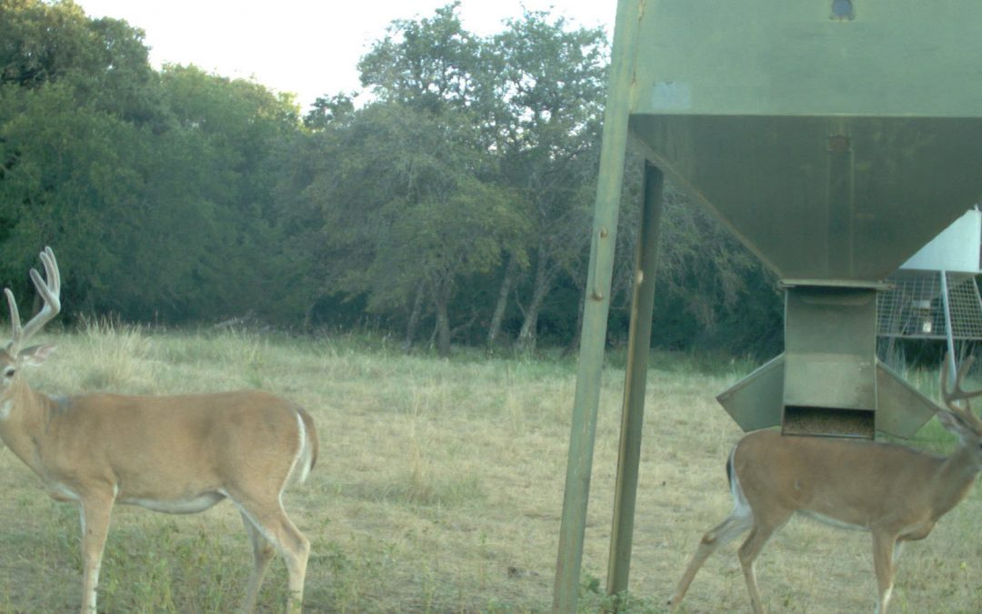 Hunting Controversies: Deer's favorite protein