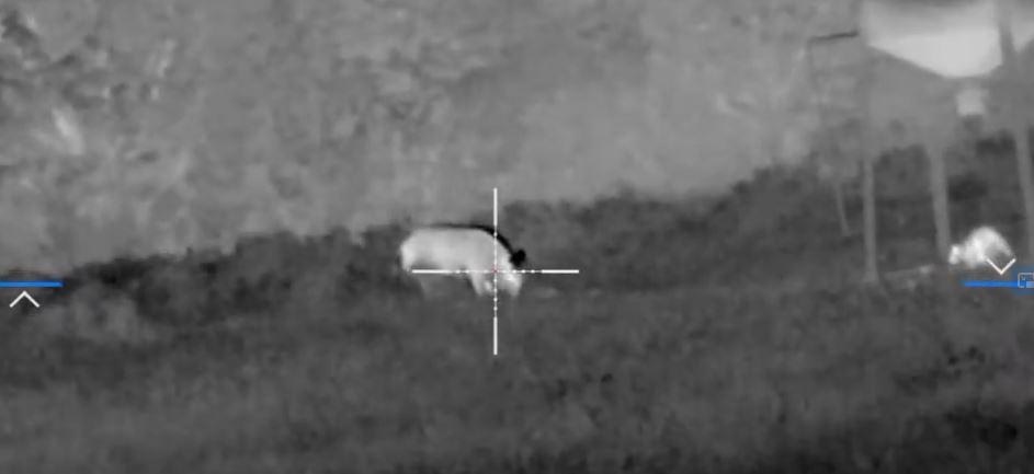 "Hunting Controversies: Nighttime pig hunting with night vision & the dreaded ""assault rifle"""